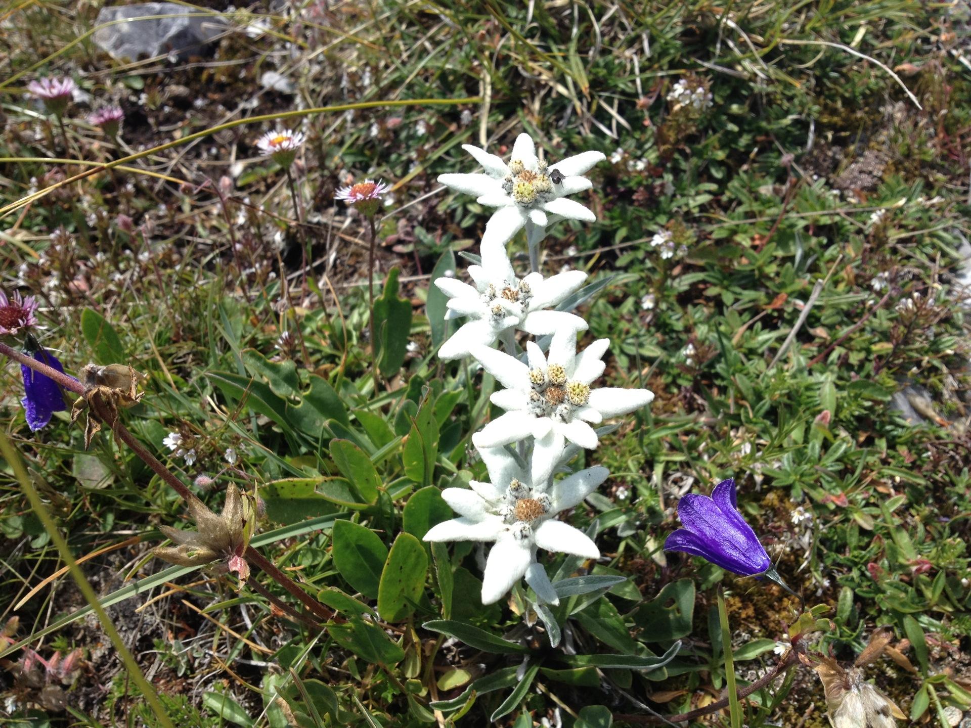 Edelweiss Klettergurt Facebook : Kletterspass am rüeblihorn edwin wandert